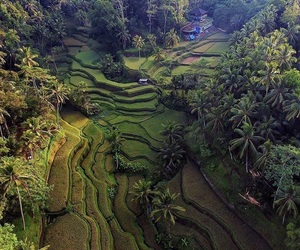 bali, nature, and landscape image