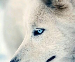cute, ❤, and wolf i love image