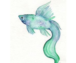 art, colour, and fish image