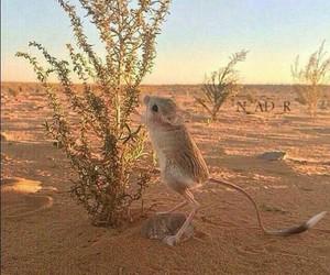 animal, desert, and arab image