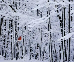 snow, winter, and bird image