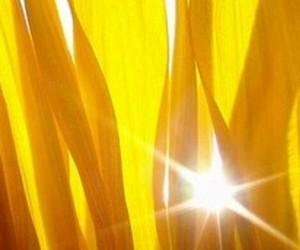 flowers, sun, and sunshine image