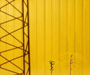 photography, shadow, and yellow image