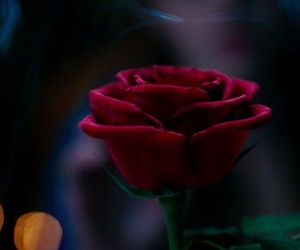 beauty and the beast and rose image