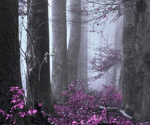 forest, landscape, and wind image