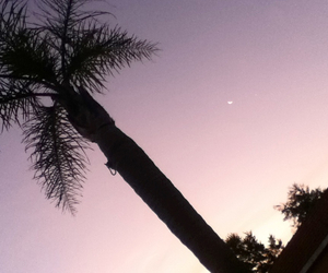 moon, palm trees, and photography image