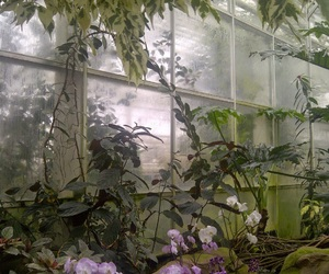 plants, pale, and grunge image