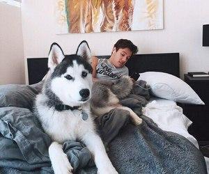 cameron dallas, dog, and bed image