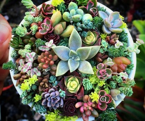 cactus and succulents image