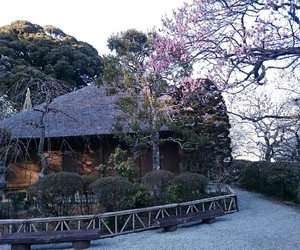 garden, tree, and japan image