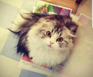 beauty, cat, and جُمال image