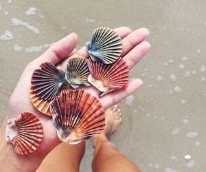 amazing, nature, and seaside image