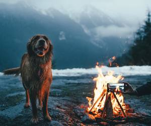 dog, mountains, and fire image