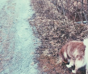 dog, road, and spring image