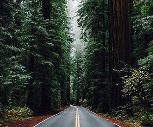 forest, wallpaper, and long road image