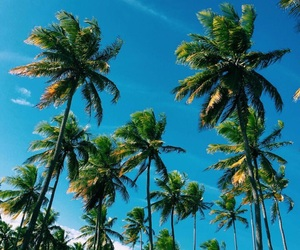 summer, palm trees, and travel image