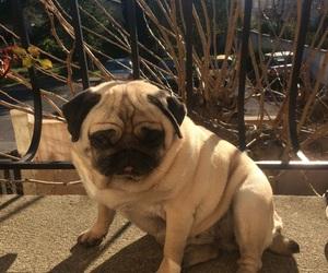 carlin, dog, and sun image