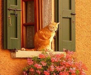 cat, window, and flowers image