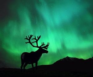 northern lights, nature, and animal image