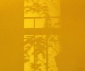 yellow, shadow, and plants image
