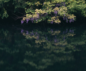 flower, pond, and reflection image