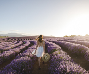Dream, girl, and lavender image