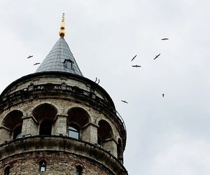 bird, aesthetic, and tower image