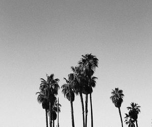 black and white and palm trees image