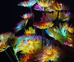 art, inspiration, and lights image