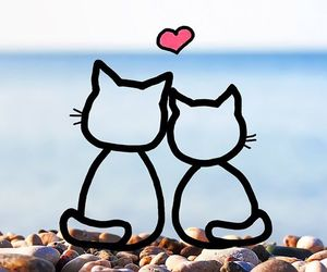 cat, wallpaper, and beach image