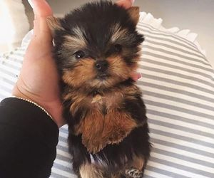 cute, puppy, and animal image