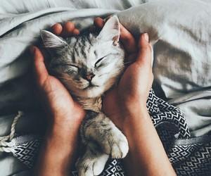 animal, sleep, and animals image