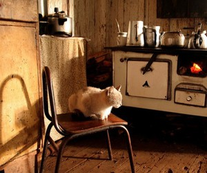 cat and kitchen image