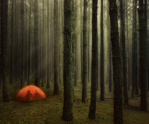forest and tent image
