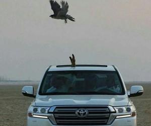 arab, falcon, and hawk image