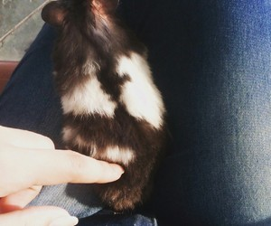 hamster, cute, and sírio image