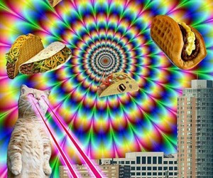 animals, cat, and taco image