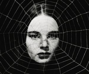 black and white and spider web image