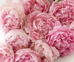 flowers, pink, and peonies image