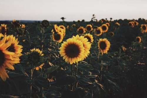 field, summer, and Sunny image