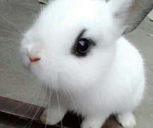 adorable, bunny, and cool image