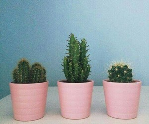 cactus, plants, and pink image