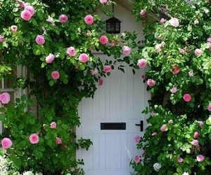 door, roses, and flower image