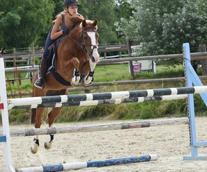 equestrian, horseriding, and horses image