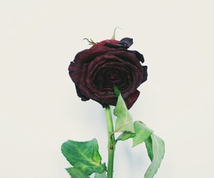 green, red, and rose image