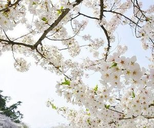 beautiful, blossom, and spring image