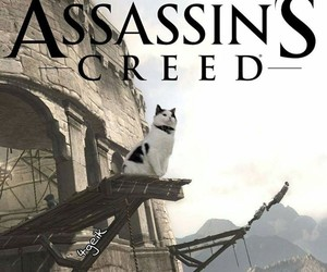 cat, funny, and assassin's creed image