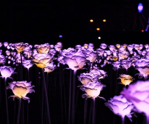 night, flowers, and south korea image