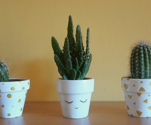 cactus, decoration, and diy image