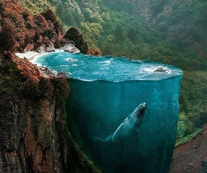 whale, forest, and nature image